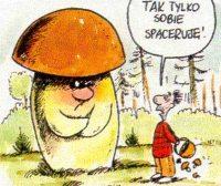 Z całą pewnością – grzyby już są!