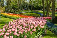 wiosna_w_ogrodzie
