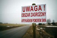 Afrykański pomór świń – powiatowy lekarz w Raciborzu ostrzega!