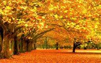 Po długich opadach deszczu z utęsknieniem czekamy na piękne oblicze jesieni.