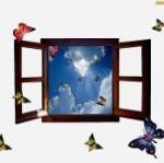 okno-otwarte-motyle