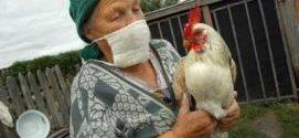 Chroń gospodarstwo przed wirusem ptasiej grypy.
