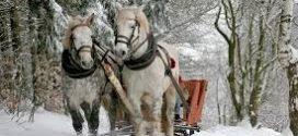 Zapraszamy na Karnawałowy Kulig – ( bez śniegu ??? ) na wąskim torze w Rudach.