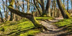 Obowiązuje tymczasowy zakaz wstępu do lasu.