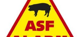Starostwo w Raciborzu po raz kolejny ostrzega wszystkich mieszkańców naszego powiatu w związku z  afrykańskim pomorem świń .
